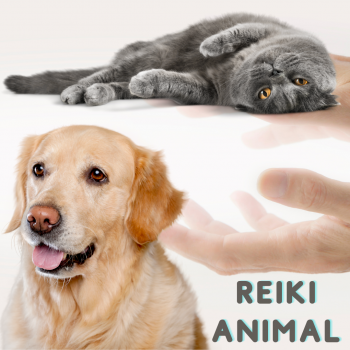 Reiki Animal.png