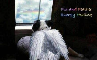 Fur and Feather Energy Healing